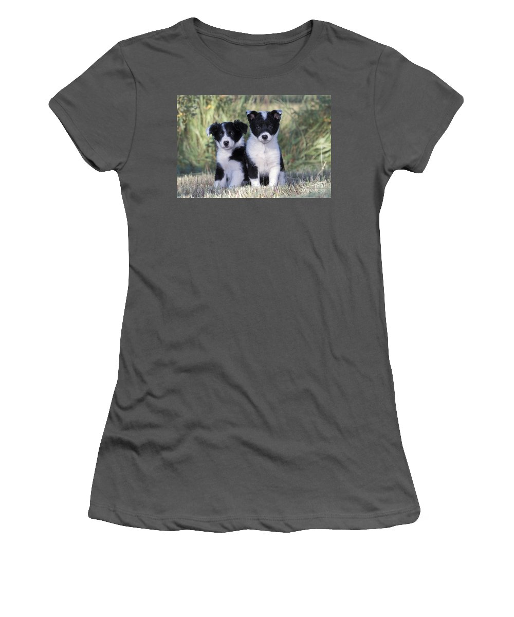 Border Collie Women's T-Shirt (Athletic Fit) featuring the photograph Border Collie Puppies by Rolf Kopfle