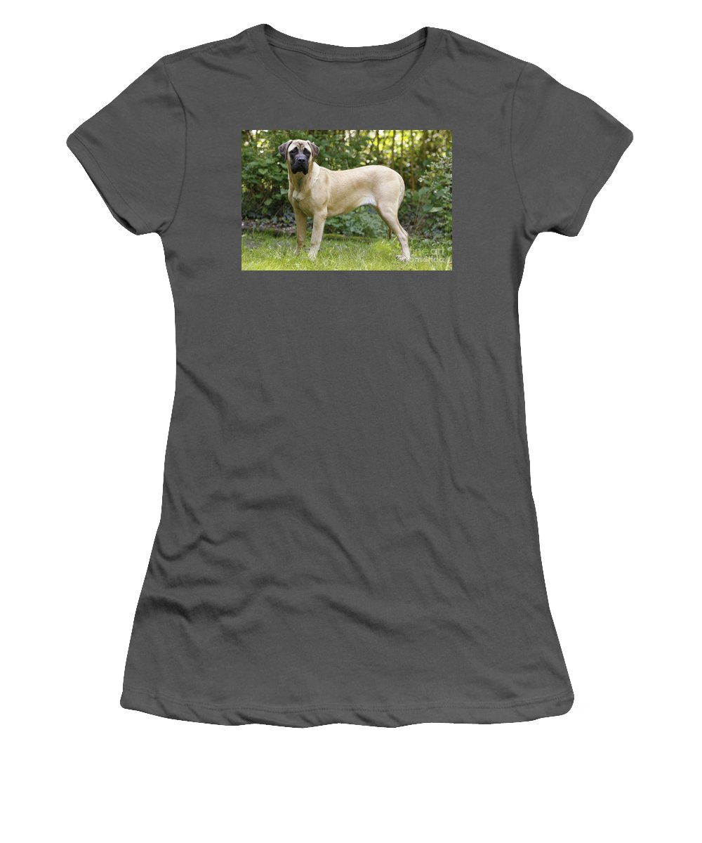Bullmastiff Women's T-Shirt (Athletic Fit) featuring the photograph Bullmastiff Dog by Jean-Michel Labat