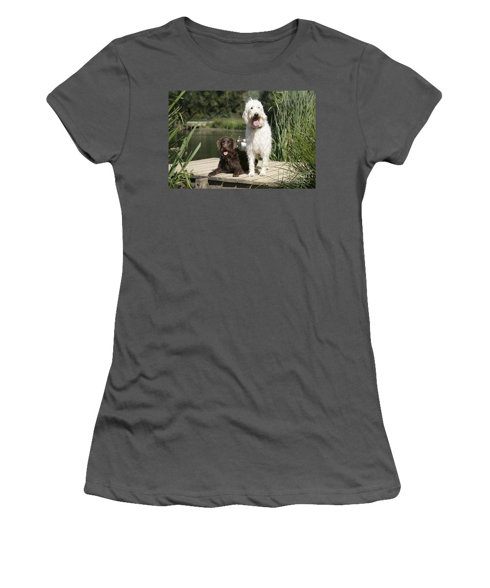 Labradoodle Women's T-Shirt (Athletic Fit) featuring the photograph Chocolate And Cream Labradoodles by John Daniels