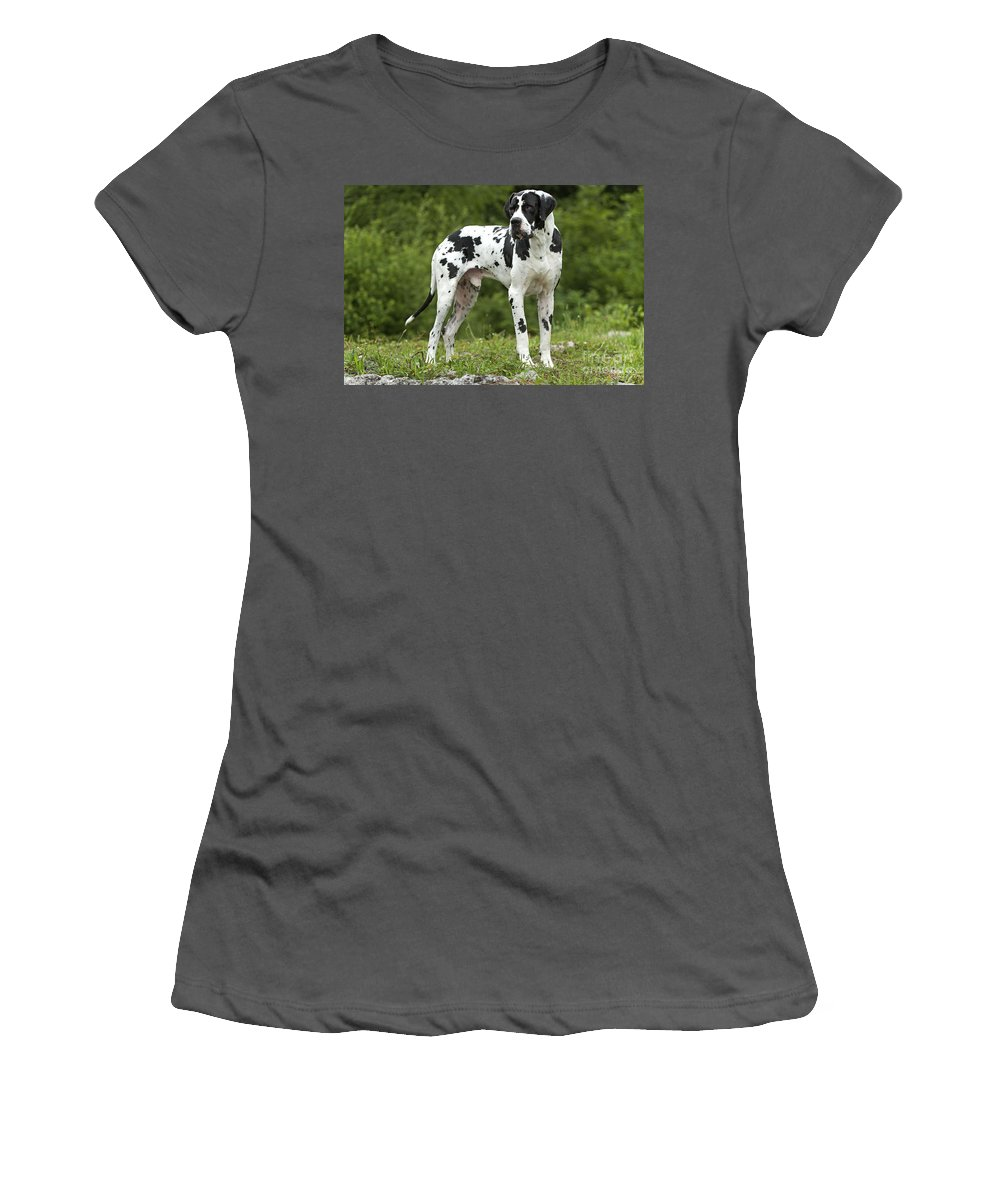 Great Dane Women's T-Shirt (Athletic Fit) featuring the photograph Harlequin Great Dane by Jean-Michel Labat