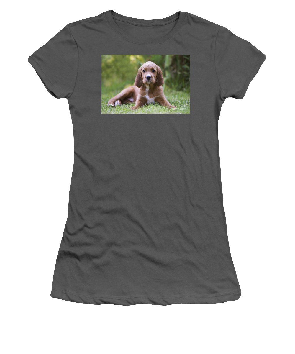 Irish Setter Women's T-Shirt (Athletic Fit) featuring the photograph Irish Setter Puppy by Jean-Michel Labat