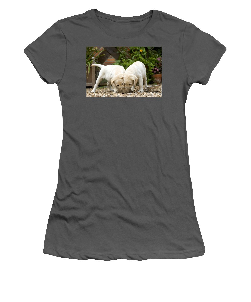 Labrador Retriever Women's T-Shirt (Athletic Fit) featuring the photograph Labrador Puppies Eating by Jean-Michel Labat