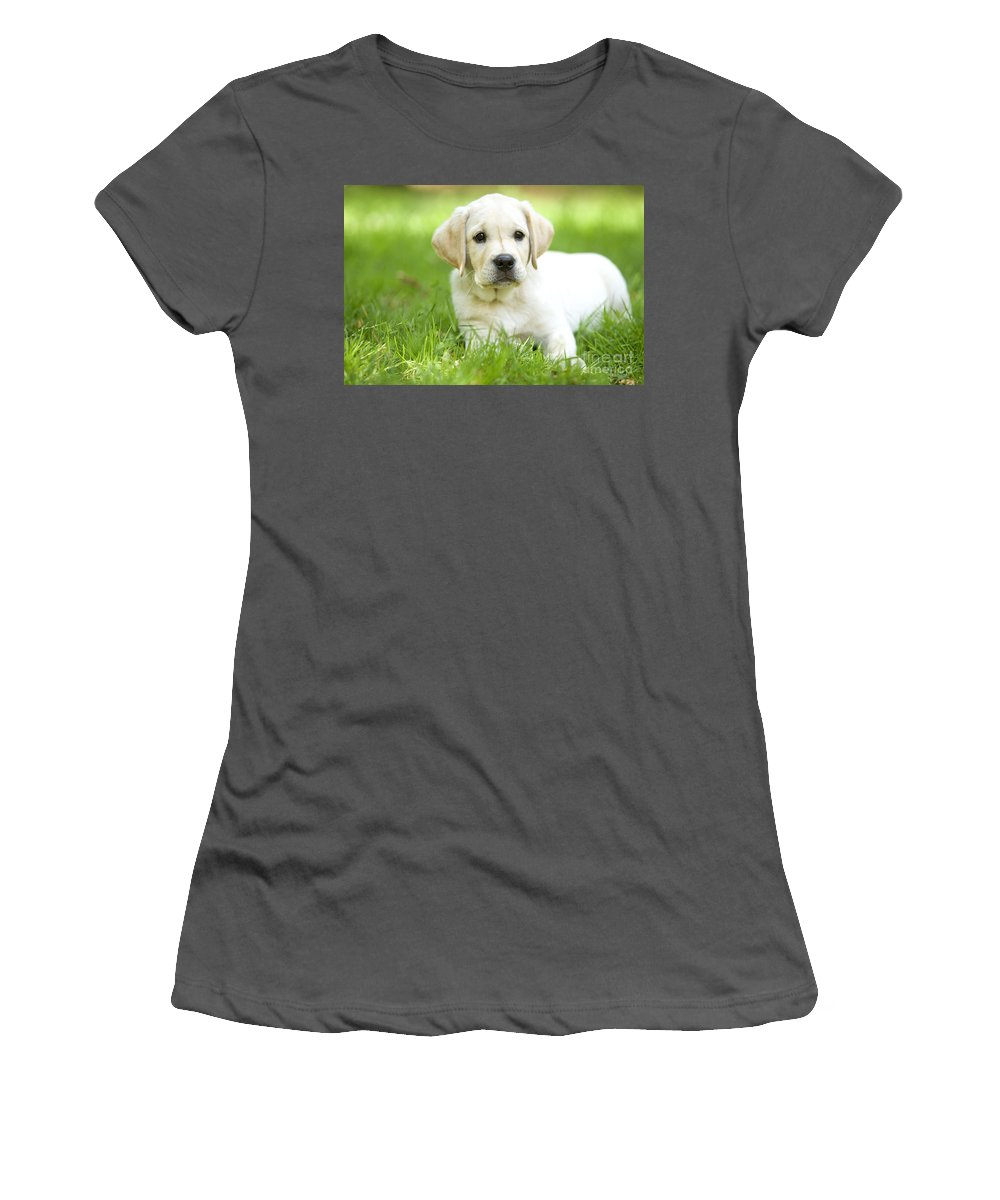 Labrador Retriever Women's T-Shirt (Athletic Fit) featuring the photograph Labrador Puppy by Jean-Michel Labat