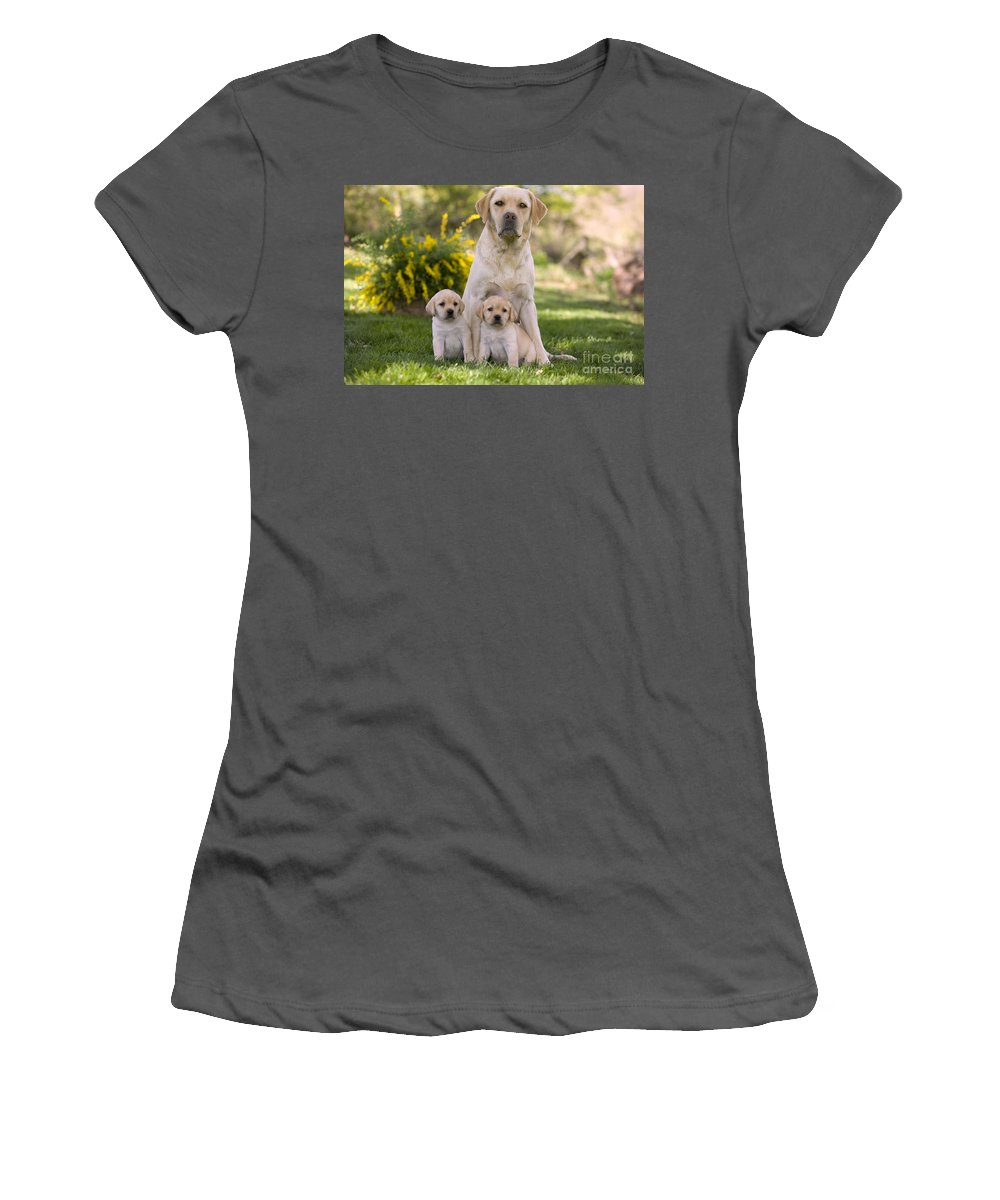 Labrador Retriever Women's T-Shirt (Athletic Fit) featuring the photograph Labrador With Two Puppies by Jean-Michel Labat