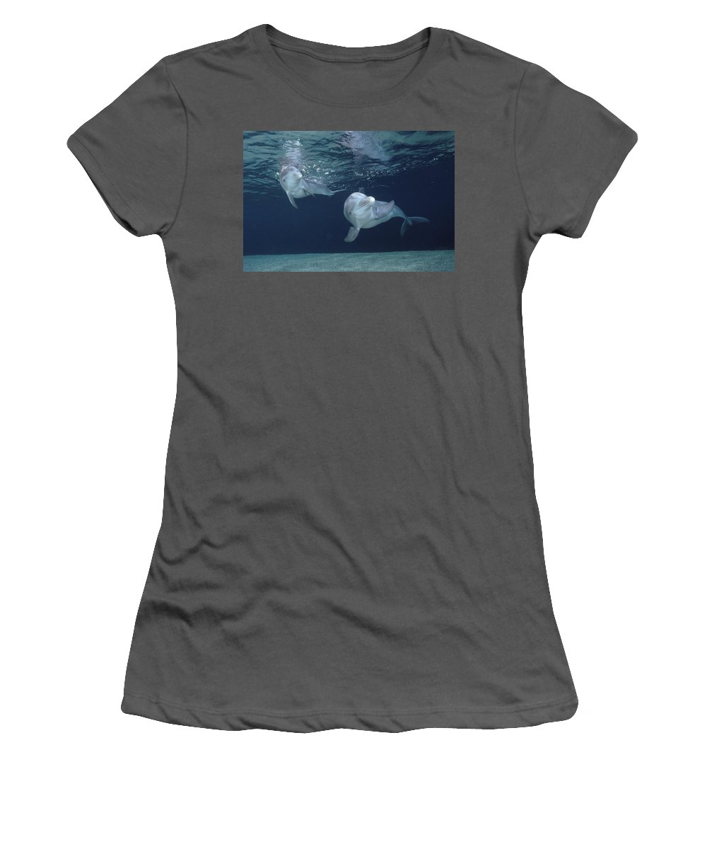 Feb0514 Women's T-Shirt (Athletic Fit) featuring the photograph Bottlenose Dolphin Pair Hawaii by Flip Nicklin