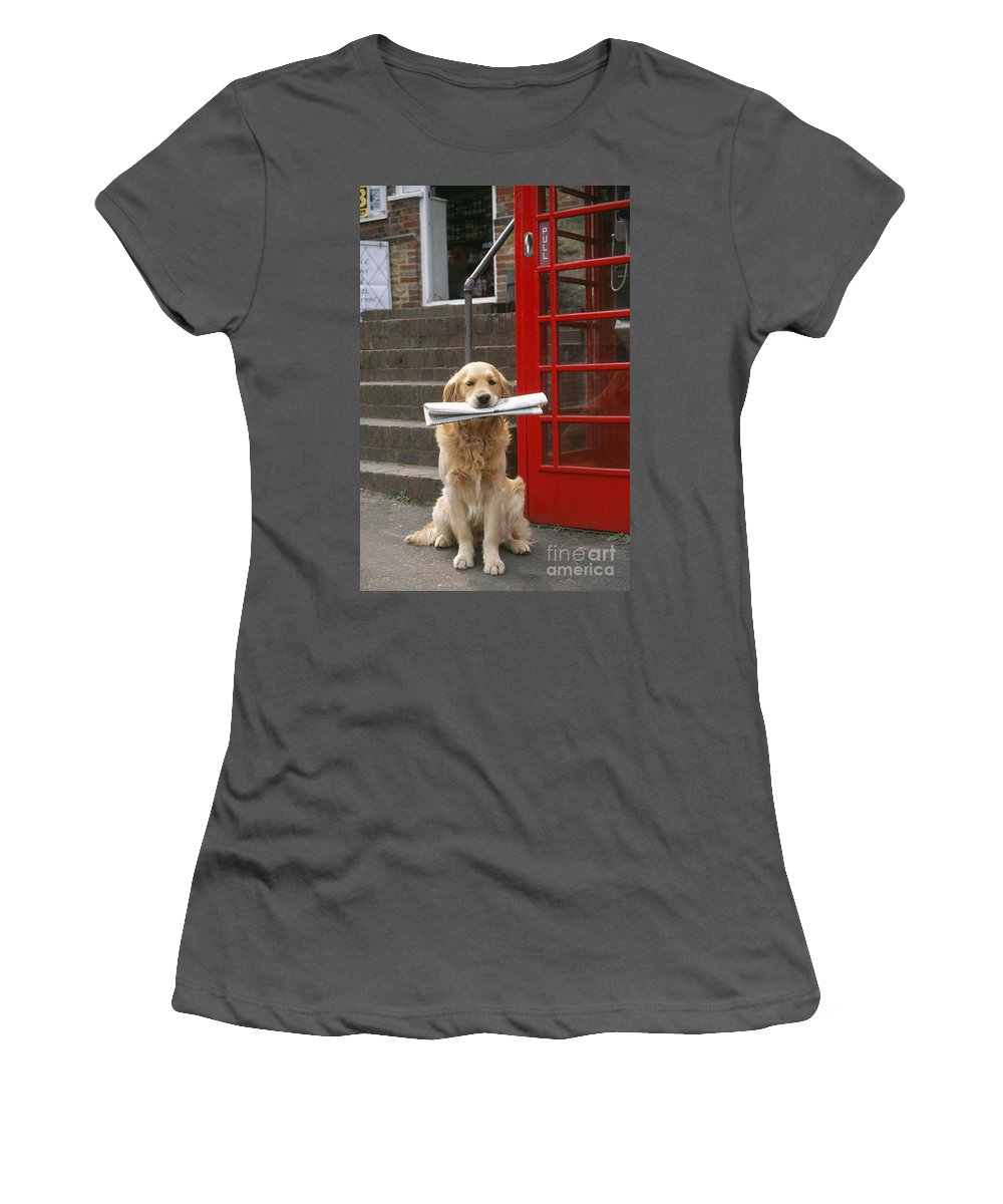 Golden Retriever Women's T-Shirt (Athletic Fit) featuring the photograph Golden Retriever Dog by John Daniels