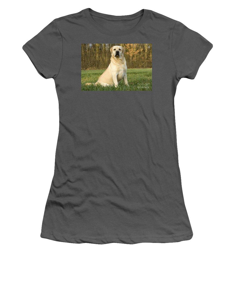 Labrador Retriever Women's T-Shirt (Athletic Fit) featuring the photograph Labrador Retriever Dog by Jean-Michel Labat