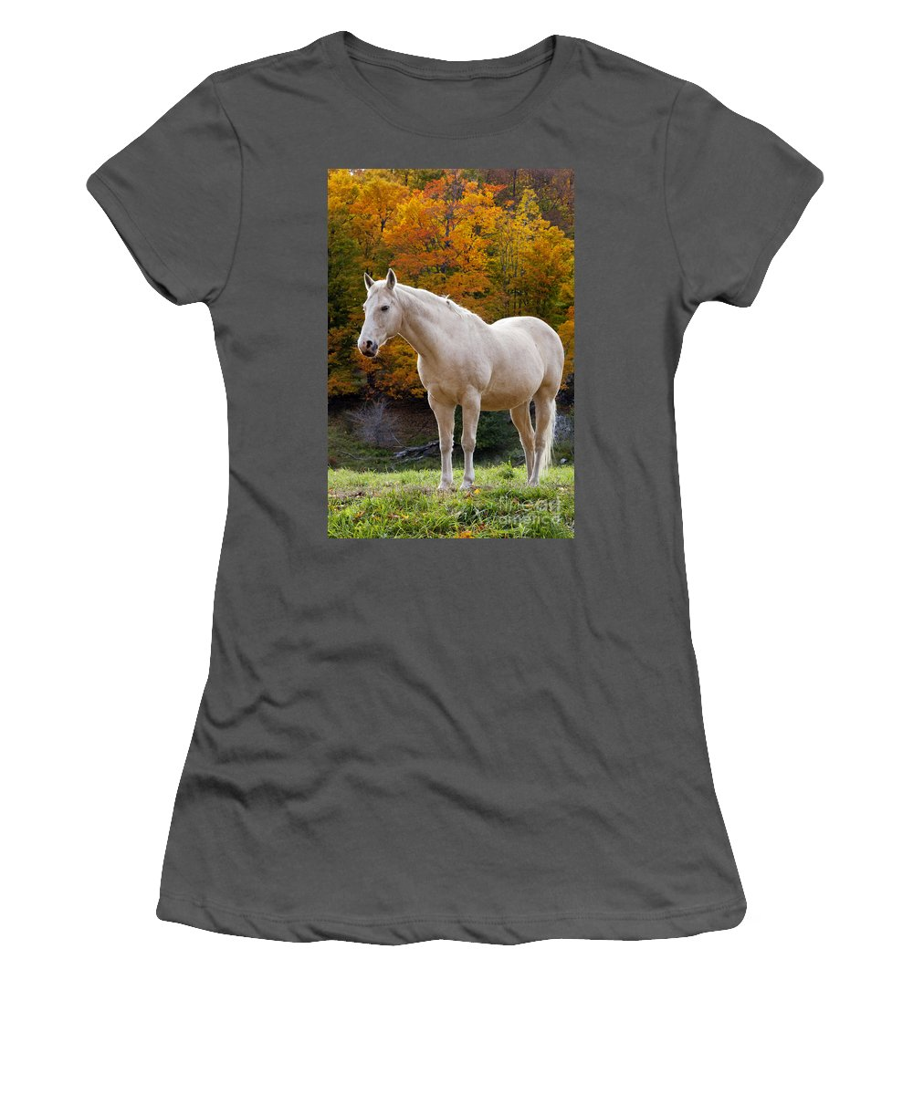 White Women's T-Shirt (Athletic Fit) featuring the photograph White Horse In Autumn by Brian Jannsen