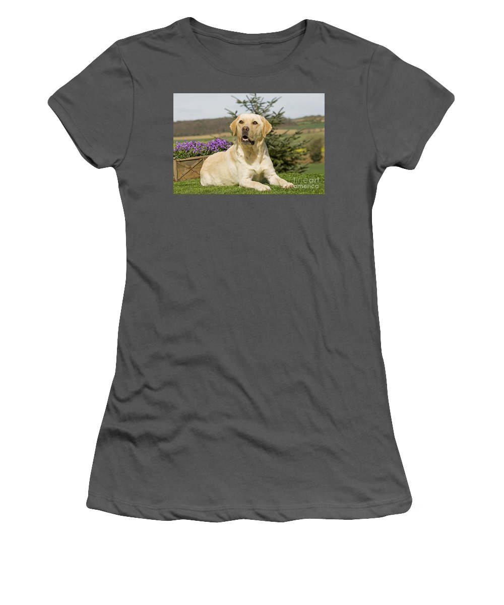 Labrador Retriever Women's T-Shirt (Athletic Fit) featuring the photograph Yellow Labrador by Jean-Michel Labat