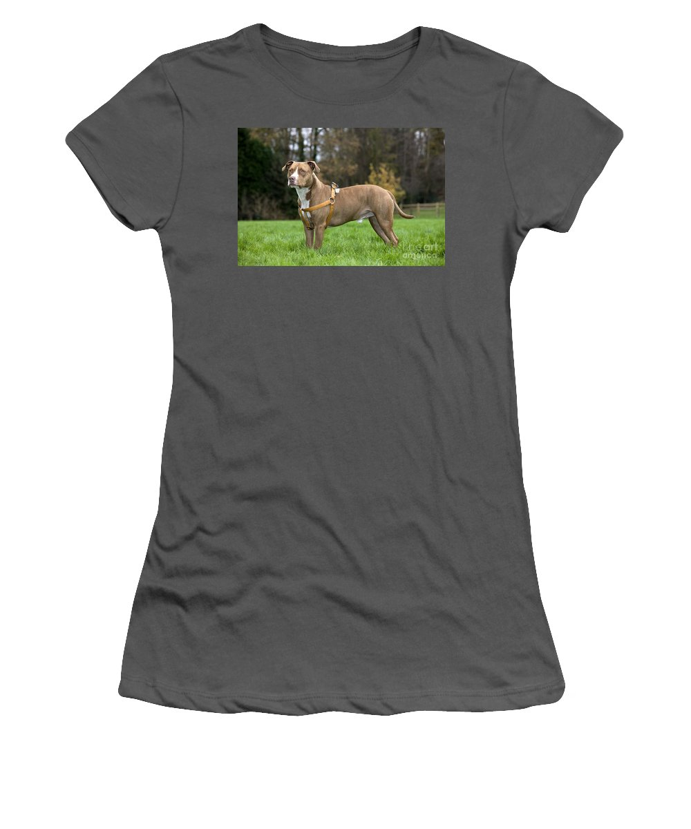 American Staffordshire Terrier Women's T-Shirt (Athletic Fit) featuring the photograph American Staffordshire Terrier by Johan De Meester