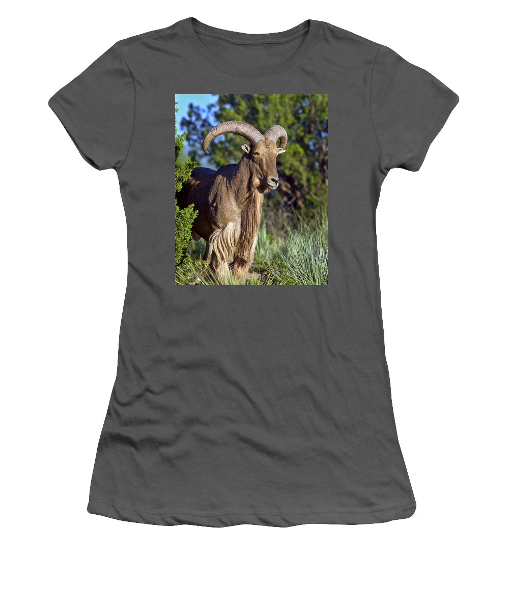 Aoudad Women's T-Shirt (Athletic Fit) featuring the photograph Aoudad Sheep by Gary Langley