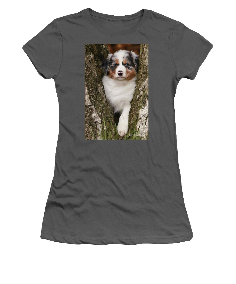 Australian Sheepdog Women's T-Shirt (Athletic Fit) featuring the photograph Australian Shepherd Puppy by Jean-Michel Labat
