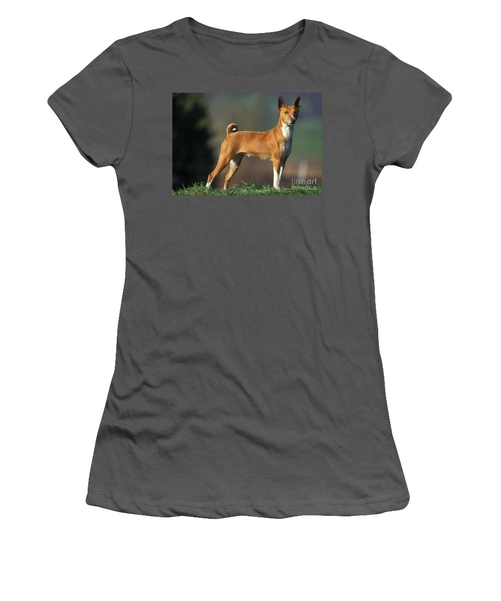 Basenji Women's T-Shirt (Athletic Fit) featuring the photograph Basenji Dog by Jean-Michel Labat