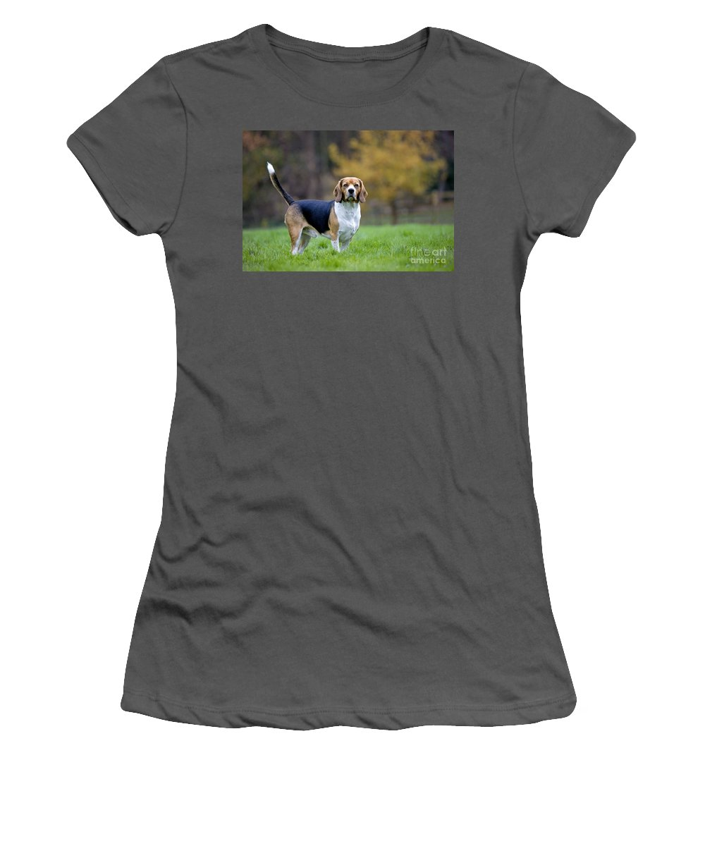 Beagle Women's T-Shirt (Athletic Fit) featuring the photograph Beagle Dog by Johan De Meester