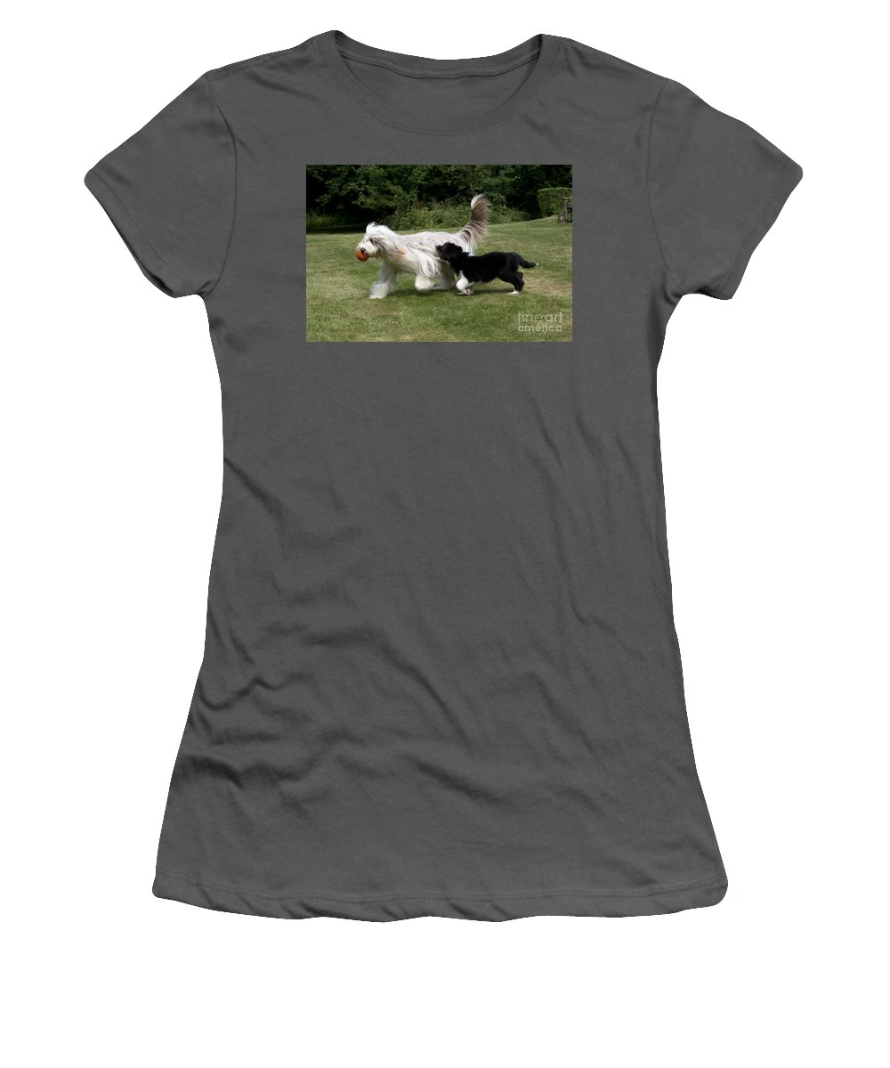 Bearded Collie Women's T-Shirt (Athletic Fit) featuring the photograph Bearded Collies Playing by John Daniels