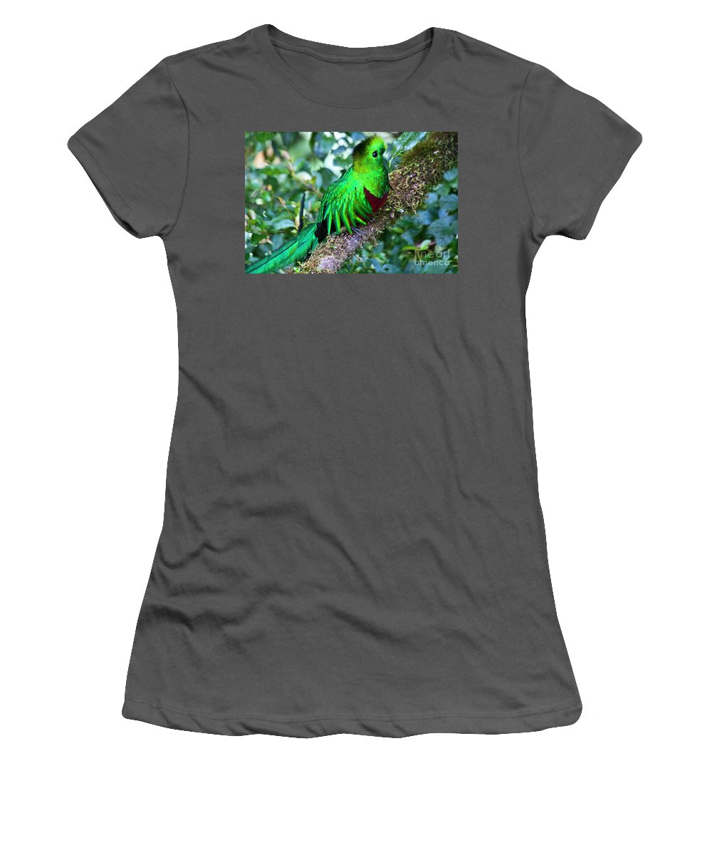 Bird Women's T-Shirt (Athletic Fit) featuring the photograph Beautiful Quetzal 2 by Heiko Koehrer-Wagner