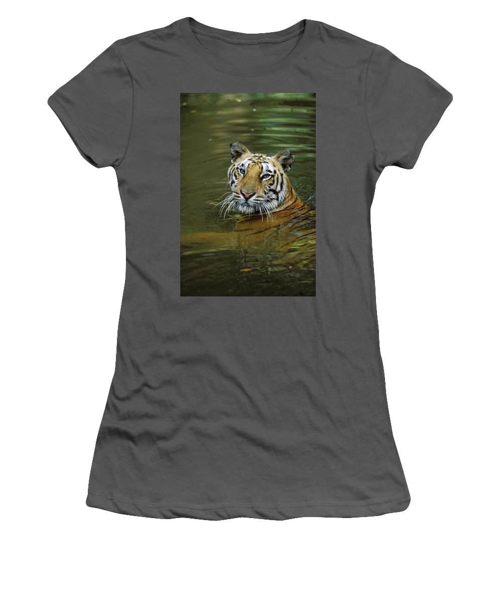 Feb0514 Women's T-Shirt (Athletic Fit) featuring the photograph Bengal Tiger In Water Native To India by Konrad Wothe