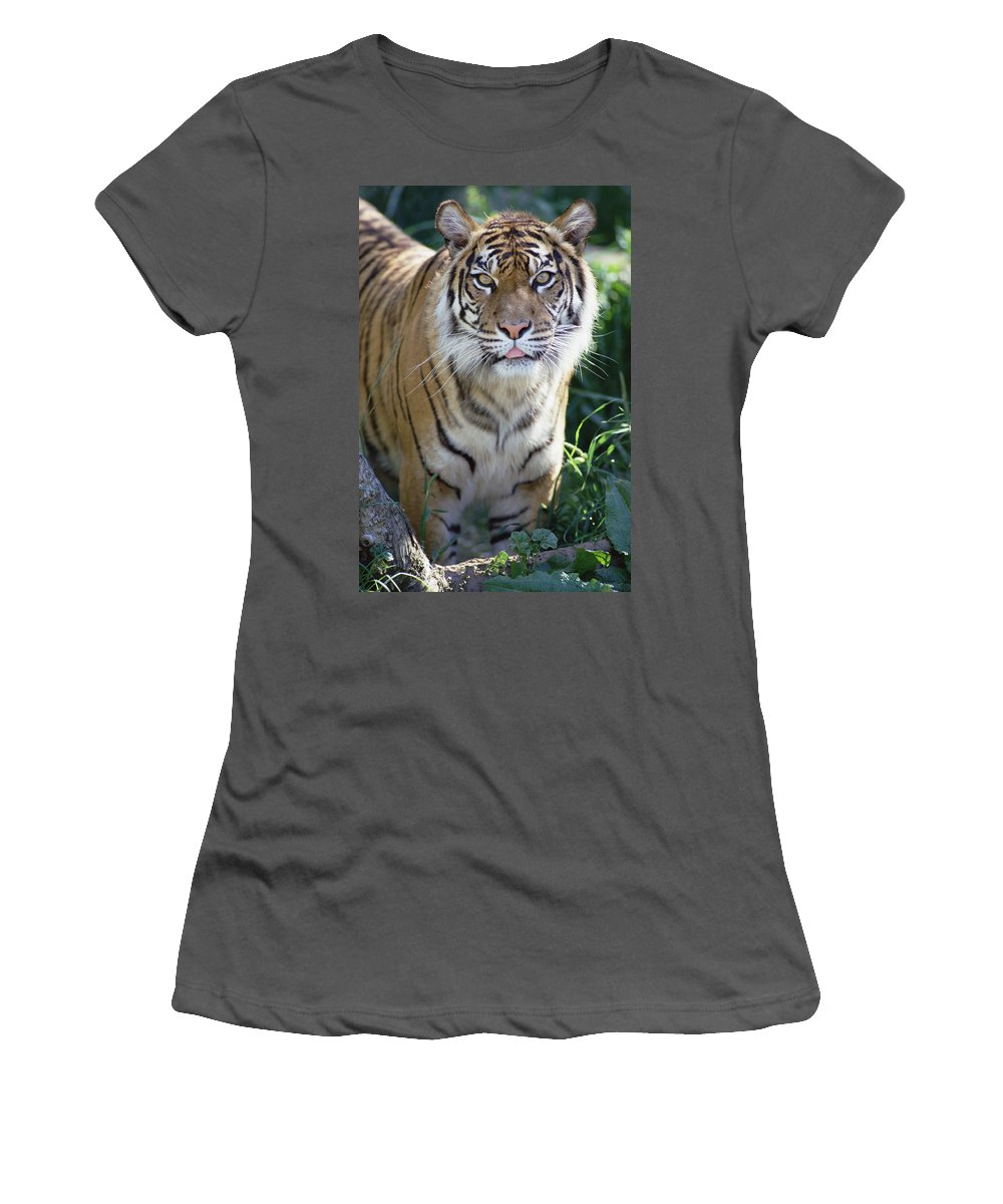 Feb0514 Women's T-Shirt (Athletic Fit) featuring the photograph Bengal Tiger Portrait by Gerry Ellis
