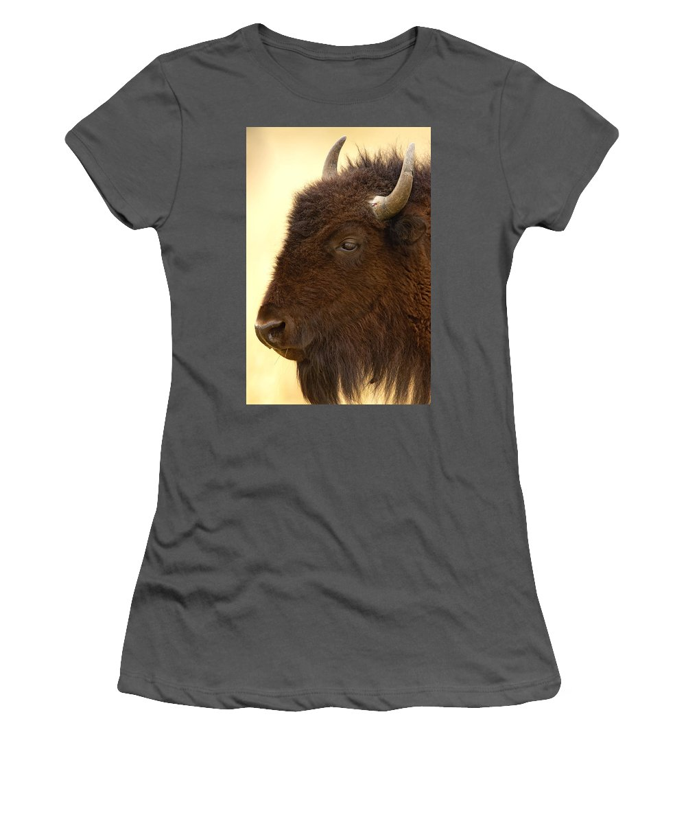 American Women's T-Shirt (Athletic Fit) featuring the photograph Bison by Jack Milchanowski