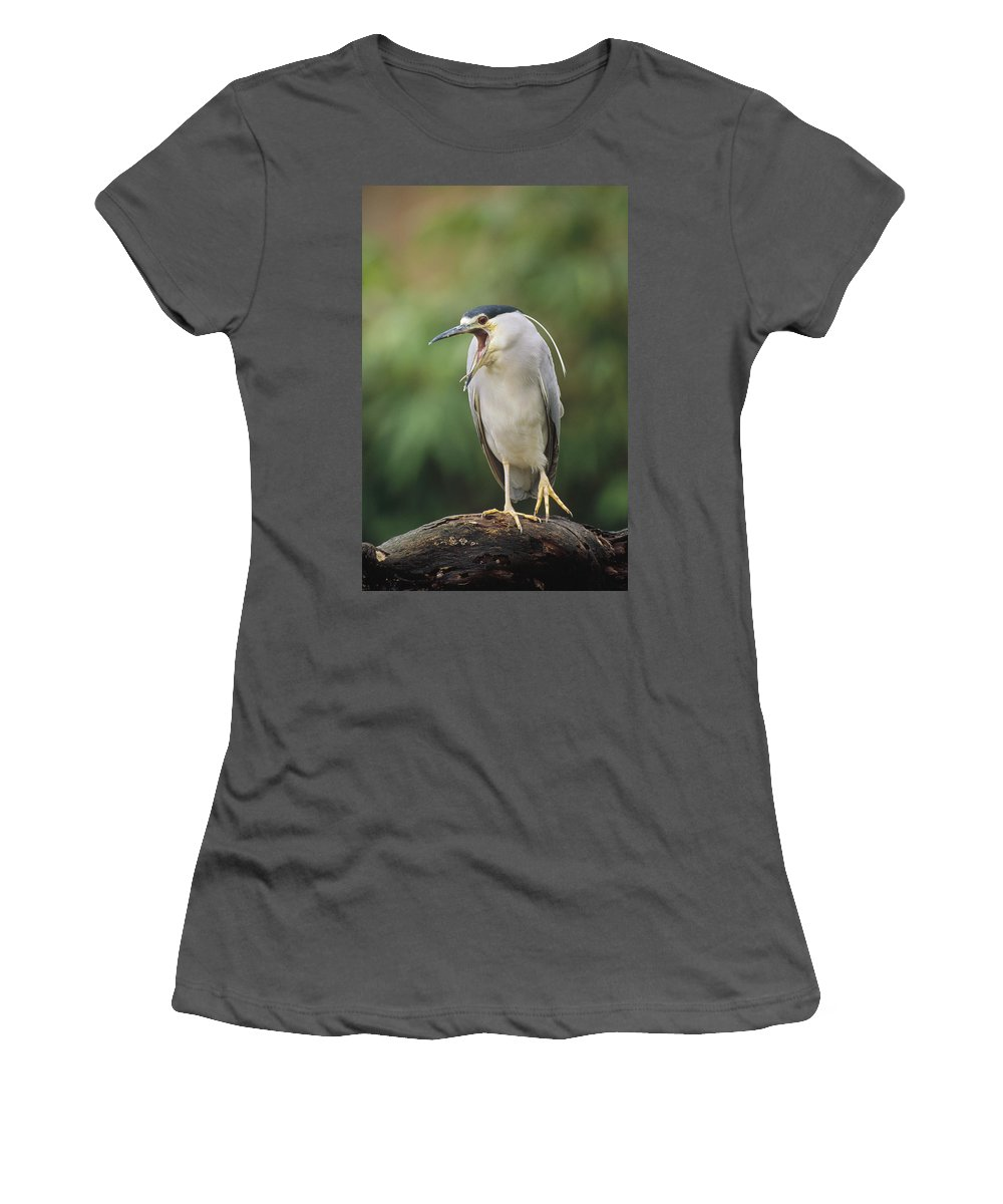 Feb0514 Women's T-Shirt (Athletic Fit) featuring the photograph Black-crowned Night Heron Calling by Konrad Wothe