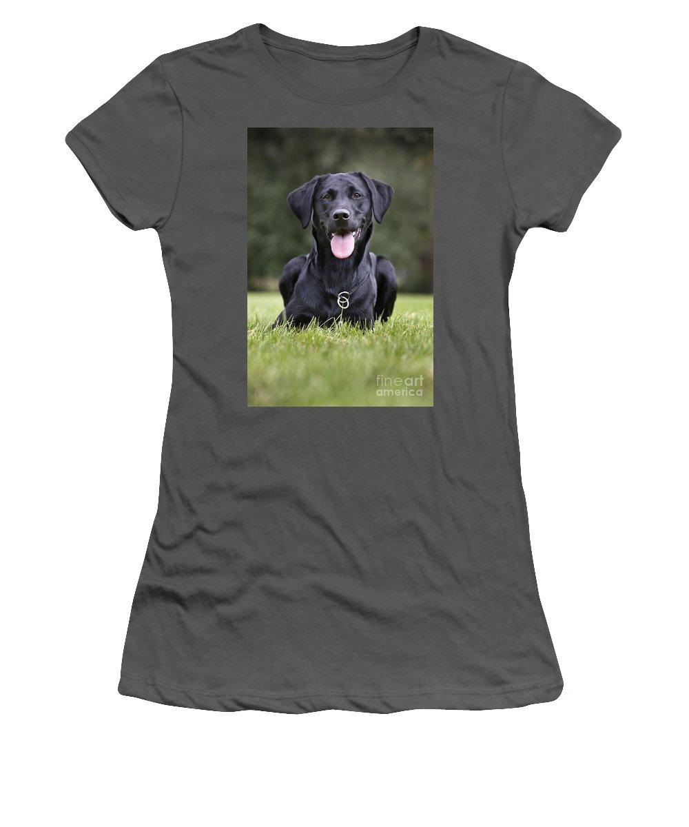 Labrador Retriever Women's T-Shirt (Athletic Fit) featuring the photograph Black Labrador Dog by Johan De Meester