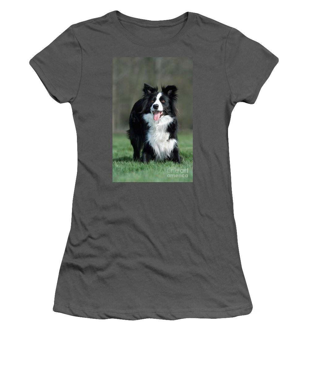 Border Collie Women's T-Shirt (Athletic Fit) featuring the photograph Border Collie Dog by Johan De Meester