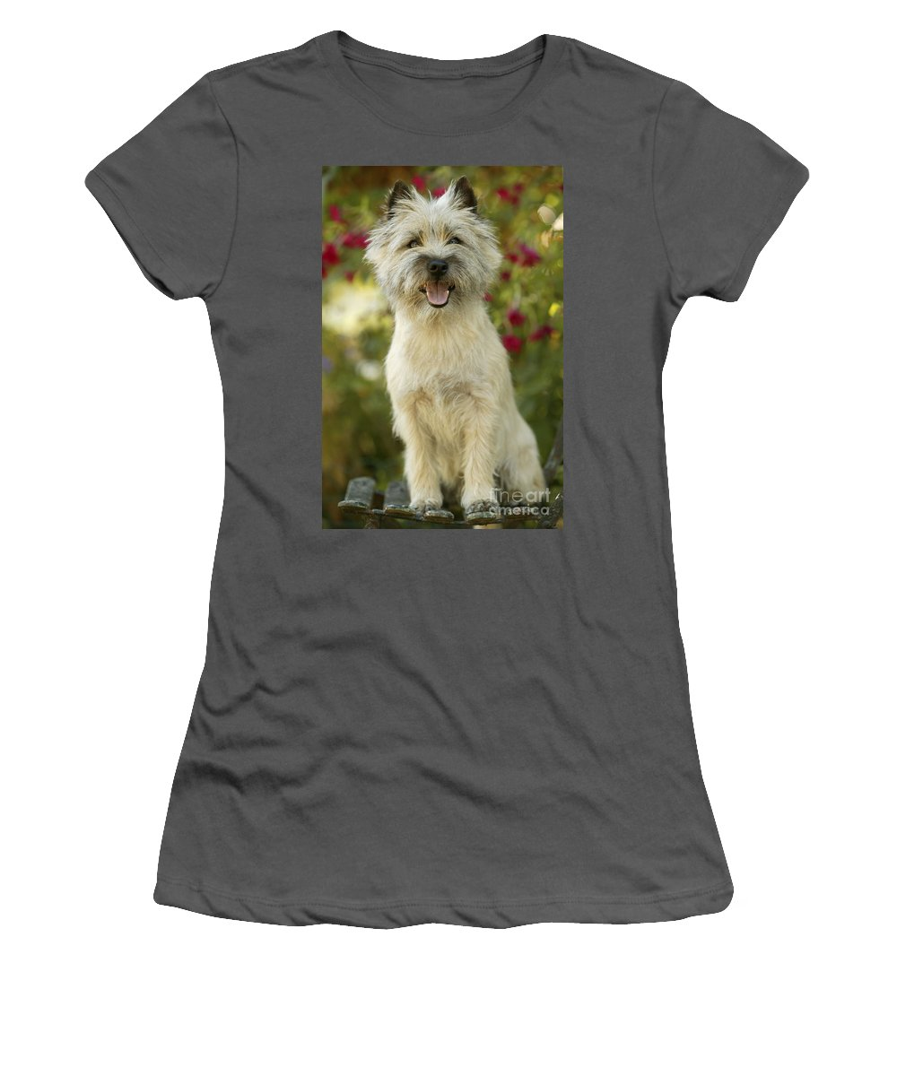 Cairn Terrier Women's T-Shirt (Athletic Fit) featuring the photograph Cairn Terrier by Jean-Michel Labat