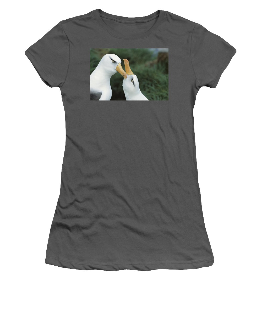 Feb0514 Women's T-Shirt (Athletic Fit) featuring the photograph Campbell Albatrosses Courting Campbell by Tui De Roy