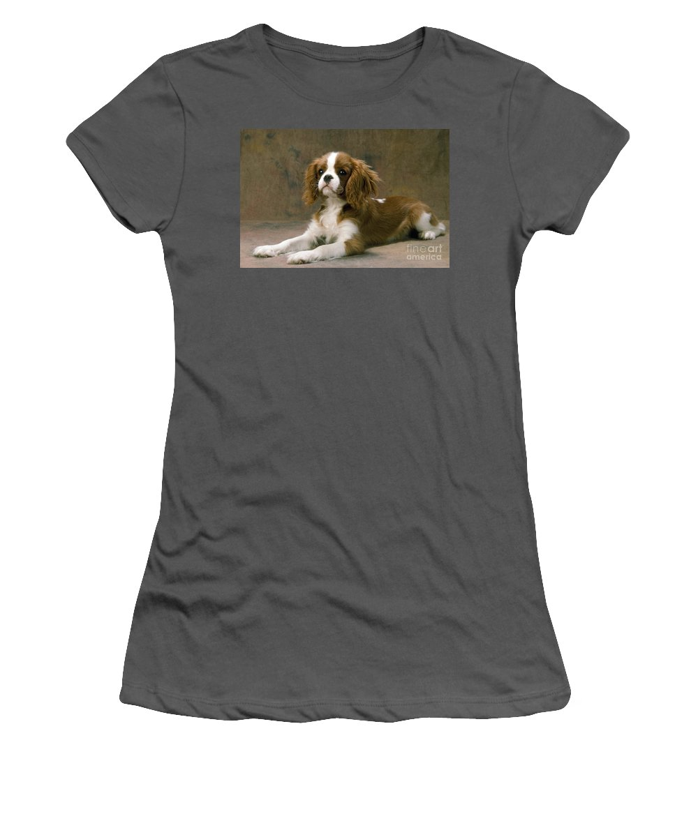 Cavalier King Charles Women's T-Shirt (Athletic Fit) featuring the photograph Cavalier King Charles Spaniel Dog Lying by John Daniels
