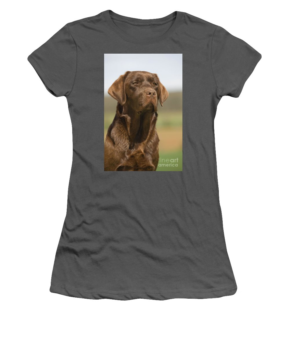 Labrador Retriever Women's T-Shirt (Athletic Fit) featuring the photograph Chocolate Labrador Dog by Jean-Michel Labat