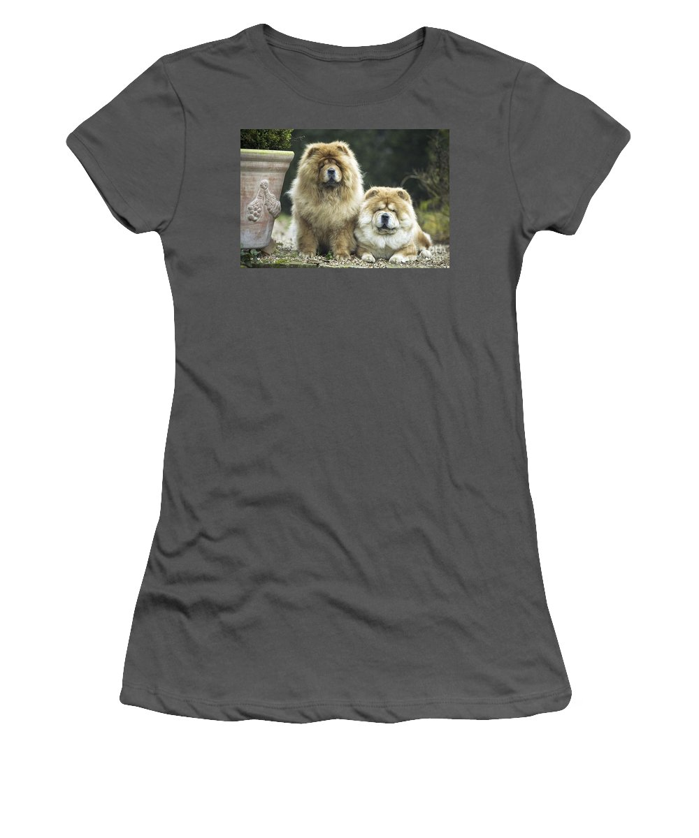 Chow-chow Women's T-Shirt (Athletic Fit) featuring the photograph Chow Chow Dogs by Jean-Michel Labat