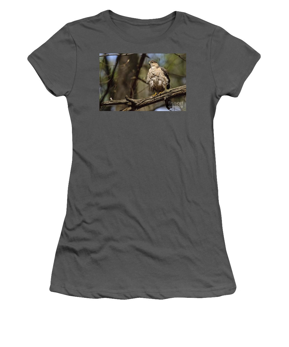 Cooper's Hawk Women's T-Shirt (Athletic Fit) featuring the photograph Coopers Hawk Pictures 124 by World Wildlife Photography