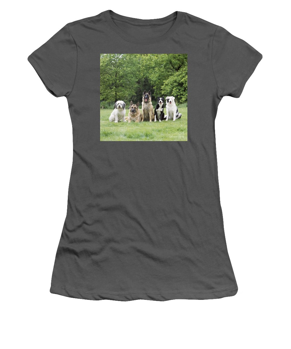Dogs Women's T-Shirt (Athletic Fit) featuring the photograph Dogs, Various Breeds In A Line by John Daniels