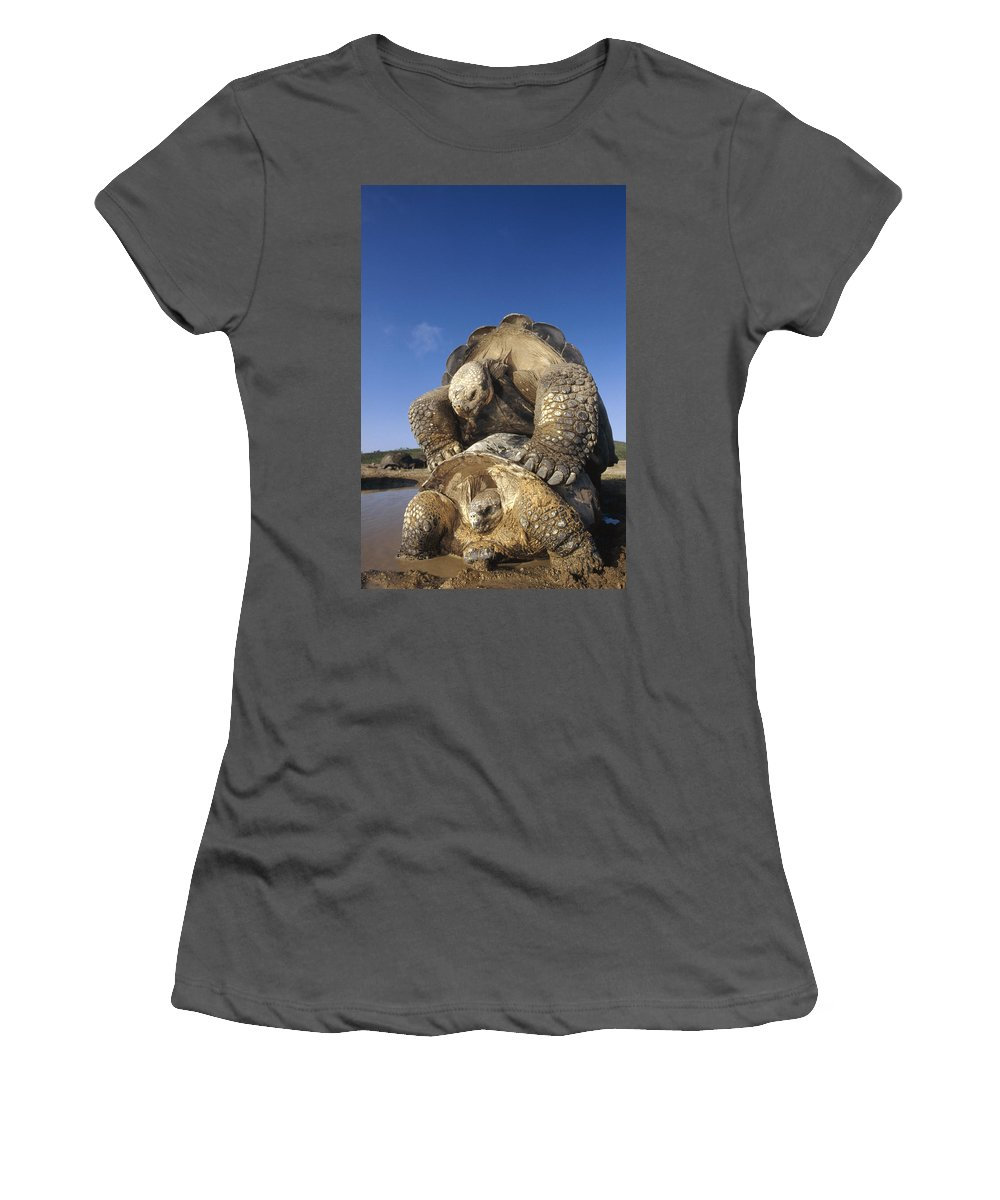 Feb0514 Women's T-Shirt (Athletic Fit) featuring the photograph Galapagos Giant Tortoise Mating Alcedo by Tui De Roy