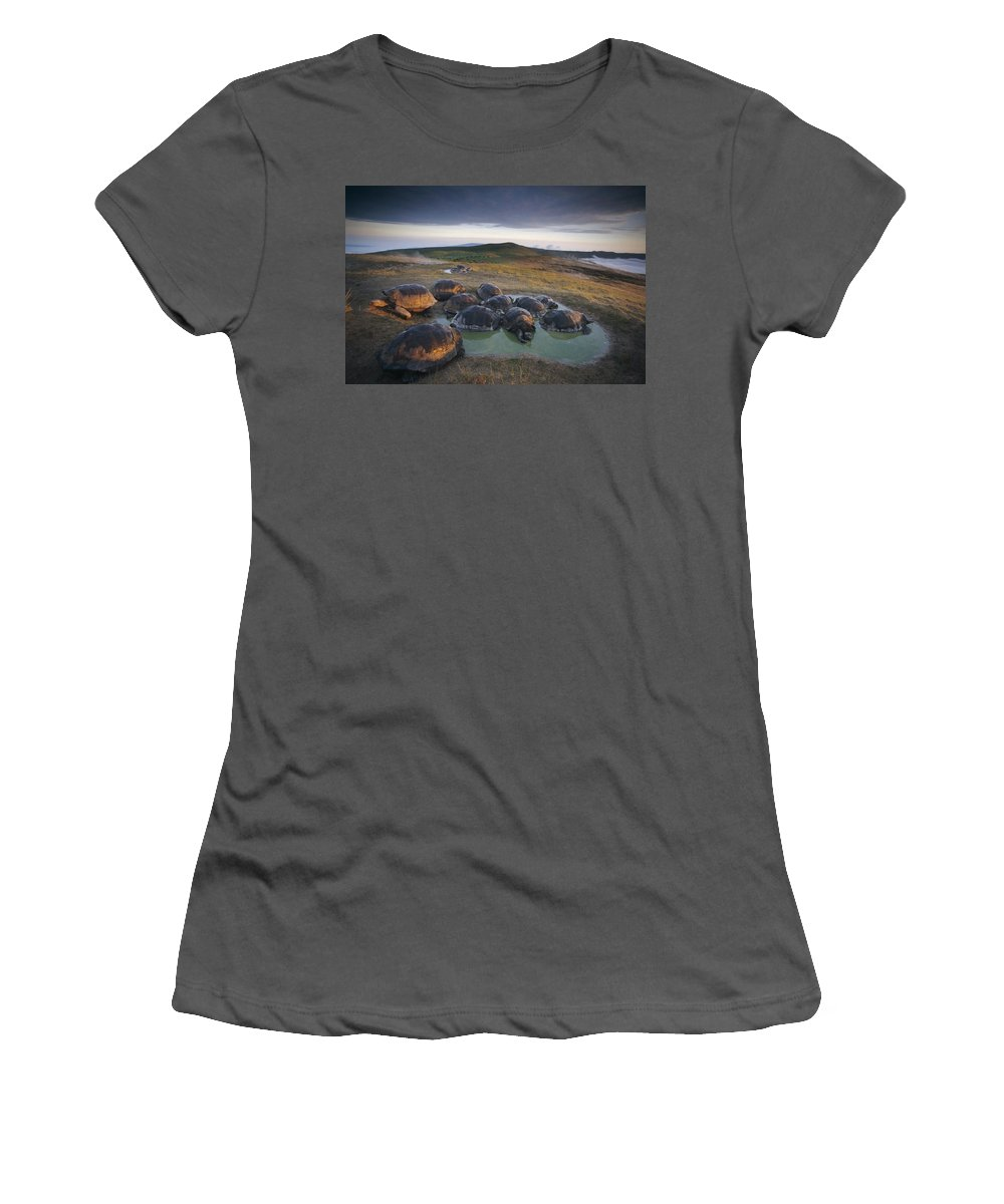 Feb0514 Women's T-Shirt (Athletic Fit) featuring the photograph Galapagos Giant Tortoise Wallowing by Tui De Roy