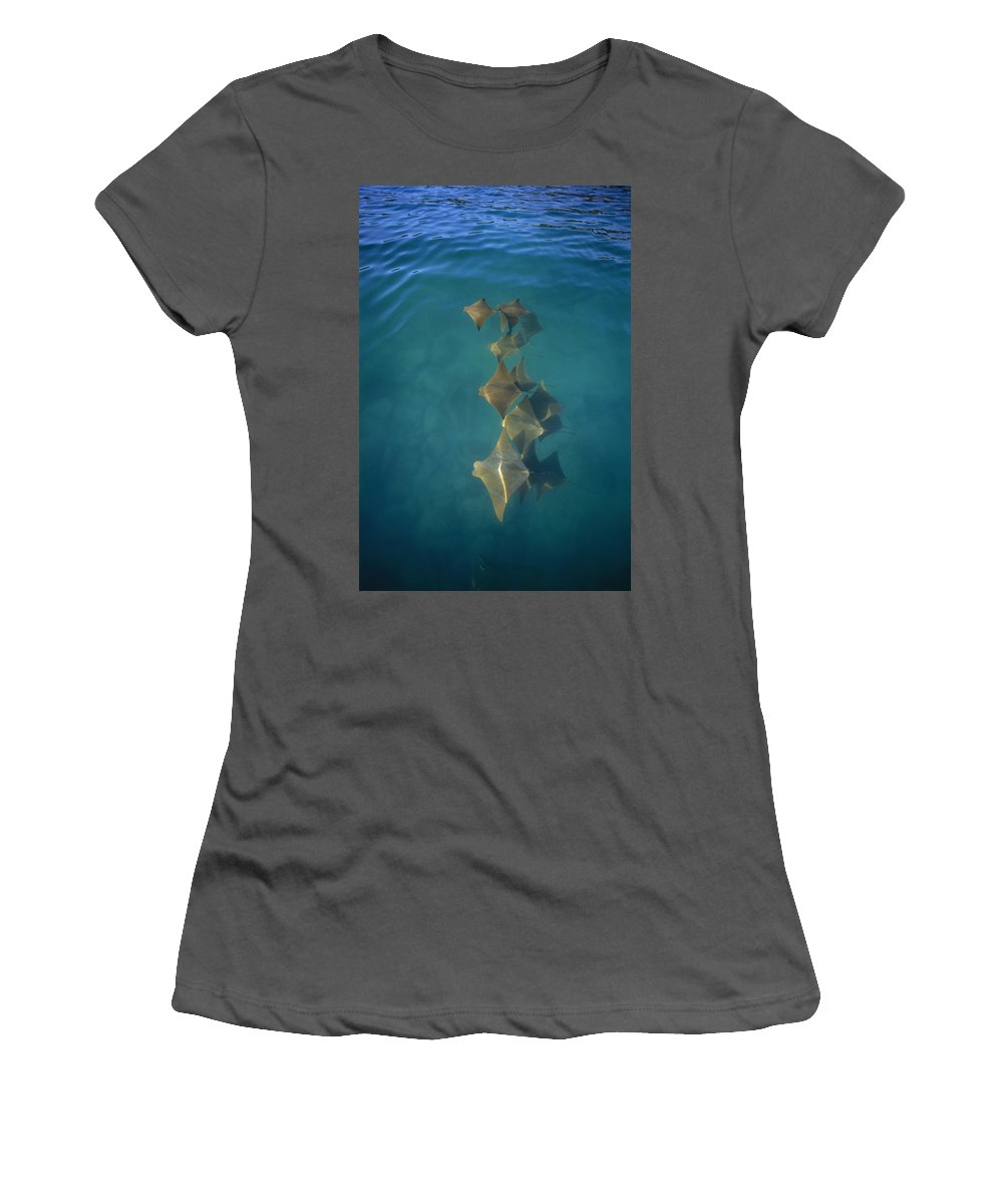 Feb0514 Women's T-Shirt (Athletic Fit) featuring the photograph Golden Cownose Rays Schooling Galapagos by Tui De Roy