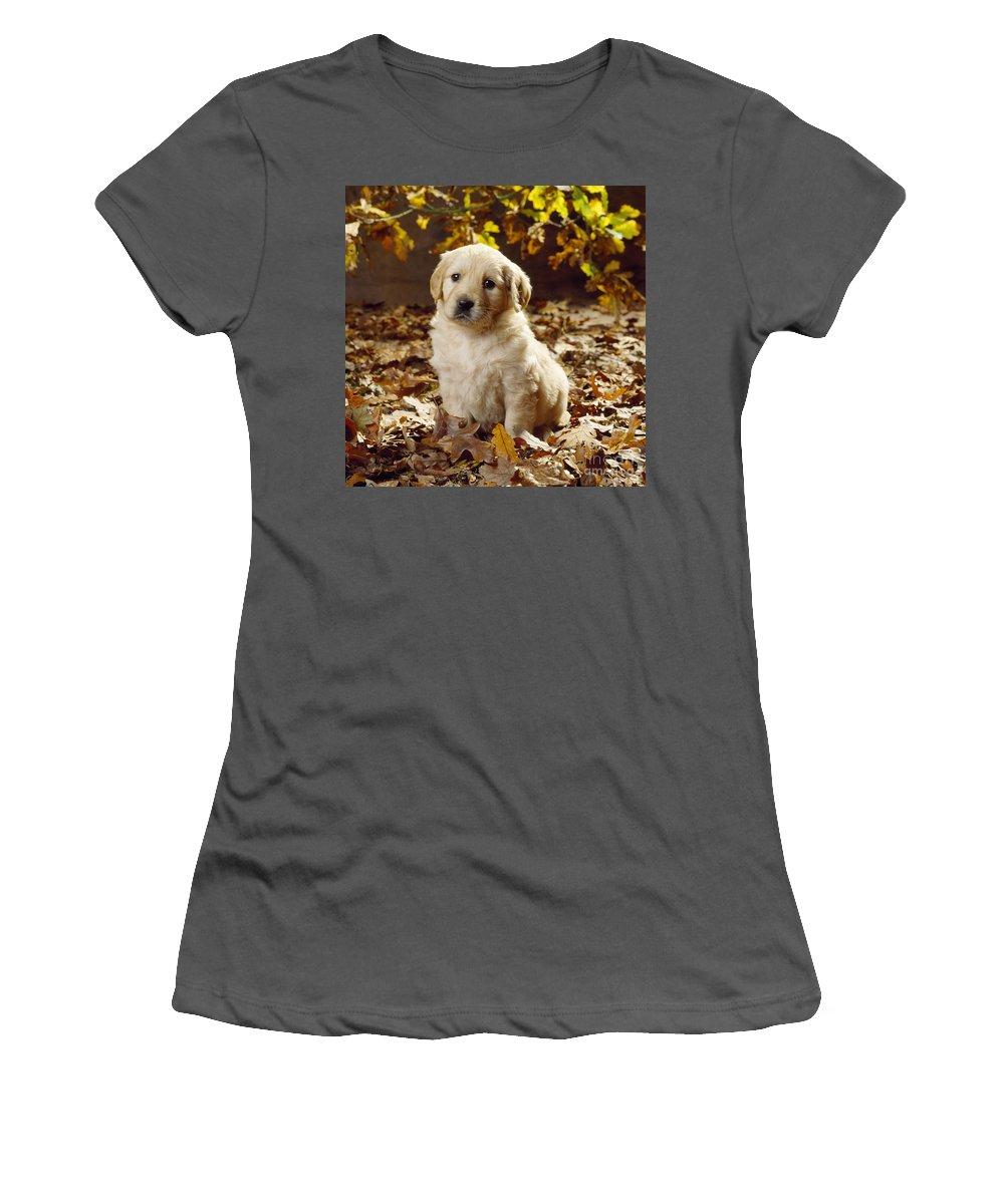 Golden Retriever Women's T-Shirt (Athletic Fit) featuring the photograph Golden Retriever Puppy Dog In Fallen by John Daniels