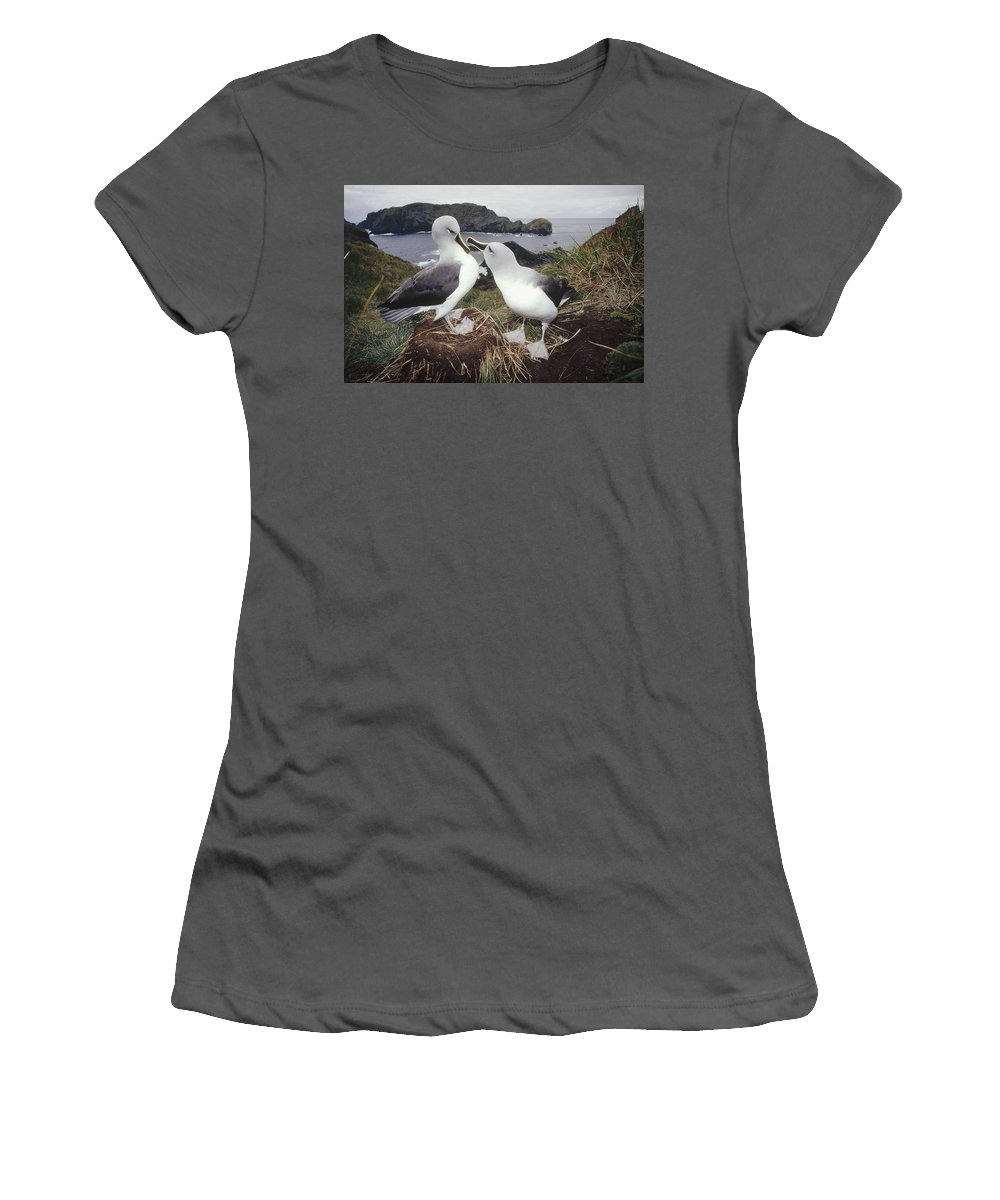 Feb0514 Women's T-Shirt (Athletic Fit) featuring the photograph Grey-headed Albatrosses Courting by Tui De Roy