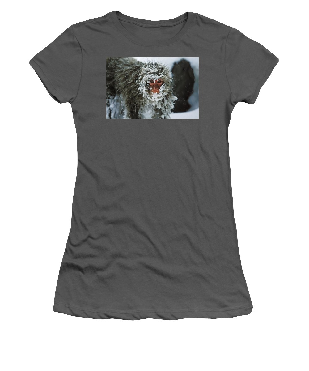 Feb0514 Women's T-Shirt (Athletic Fit) featuring the photograph Japanese Macaque Covered In Snow Japan by Konrad Wothe
