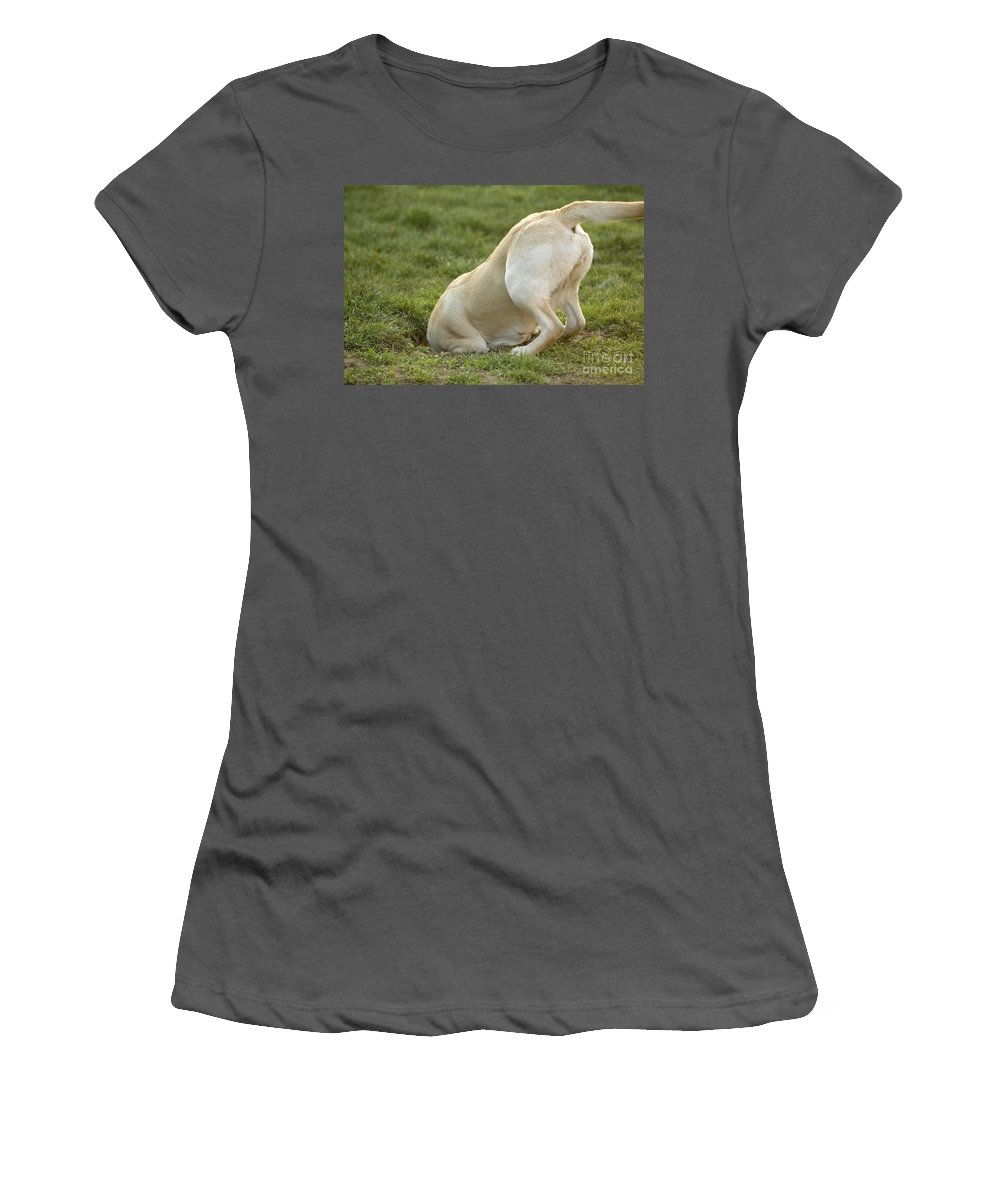 Labrador Retriever Women's T-Shirt (Athletic Fit) featuring the photograph Labrador In Hole by Jean-Michel Labat