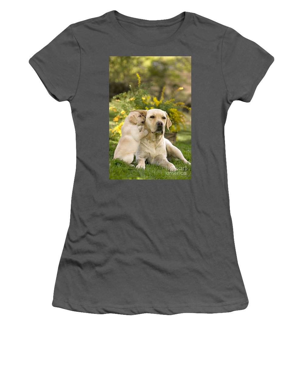 Labrador Retriever Women's T-Shirt (Athletic Fit) featuring the photograph Labrador Puppy Playing With Parent by Jean-Michel Labat