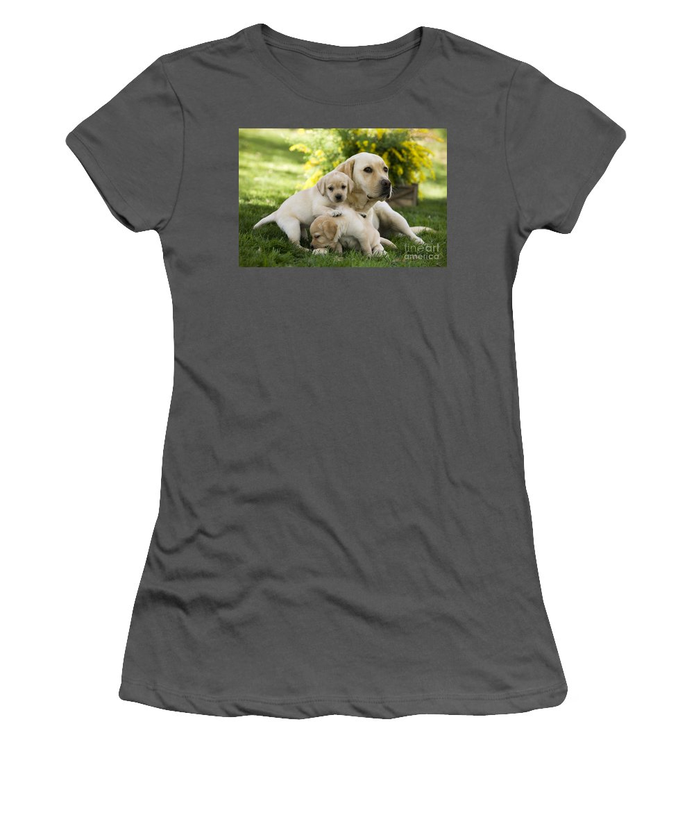 Labrador Retriever Women's T-Shirt (Athletic Fit) featuring the photograph Labrador With Young Puppies by Jean-Michel Labat