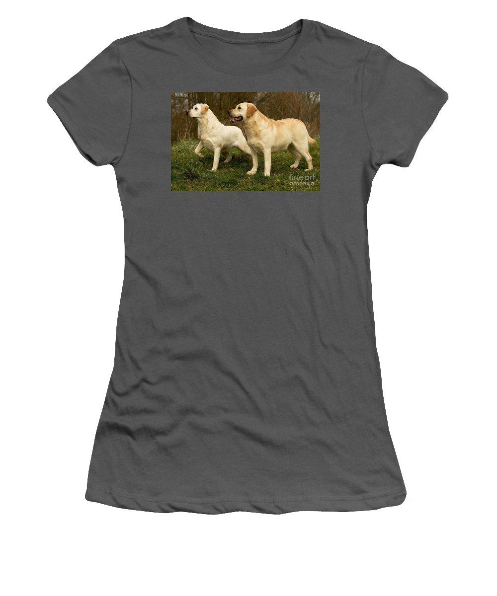 Labrador Retriever Women's T-Shirt (Athletic Fit) featuring the photograph Labradors by Jean-Michel Labat