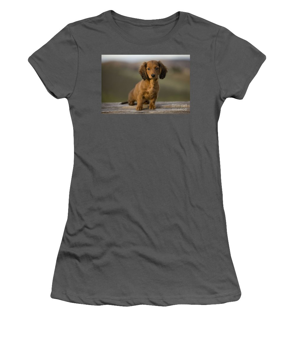 Long-haired Dachshund Women's T-Shirt (Athletic Fit) featuring the photograph Long-haired Dachshund Puppy by Jean-Michel Labat