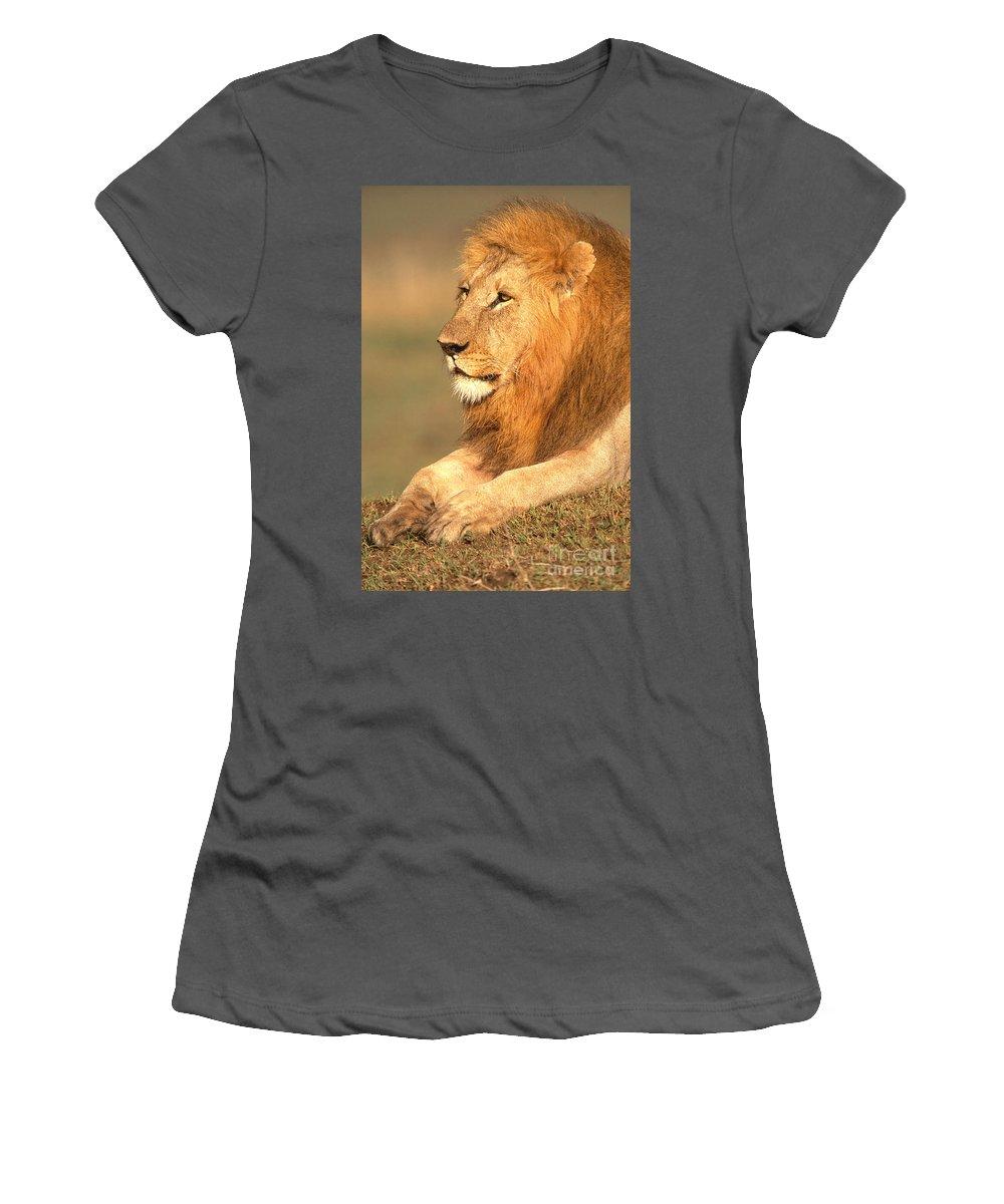 Lion Women's T-Shirt (Athletic Fit) featuring the photograph Male Lion by David Davis