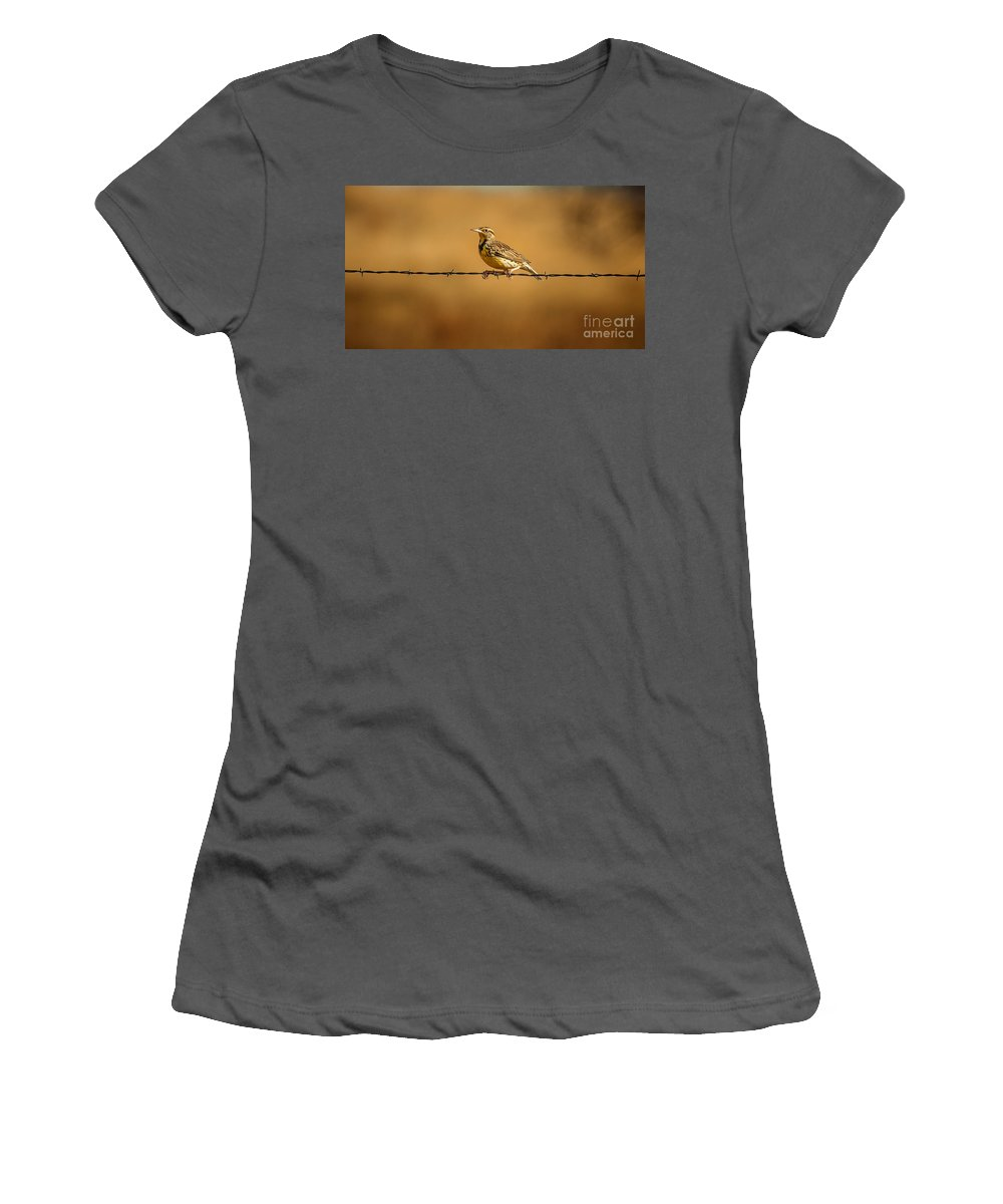 Wildlife Women's T-Shirt (Athletic Fit) featuring the photograph Meadowlark And Barbed Wire by Robert Frederick