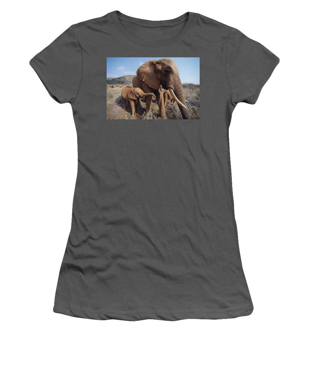Feb0514 Women's T-Shirt (Athletic Fit) featuring the photograph Orphans Malaika With Nyiro Tsavo Kenya by Gerry Ellis