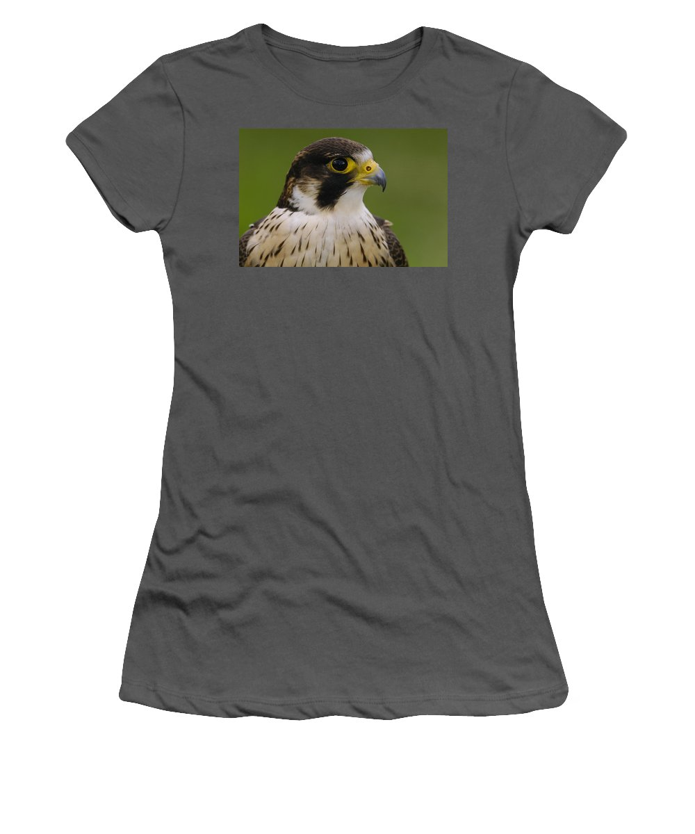 Feb0514 Women's T-Shirt (Athletic Fit) featuring the photograph Peregrine Falcon Portrait Ecuador by Pete Oxford