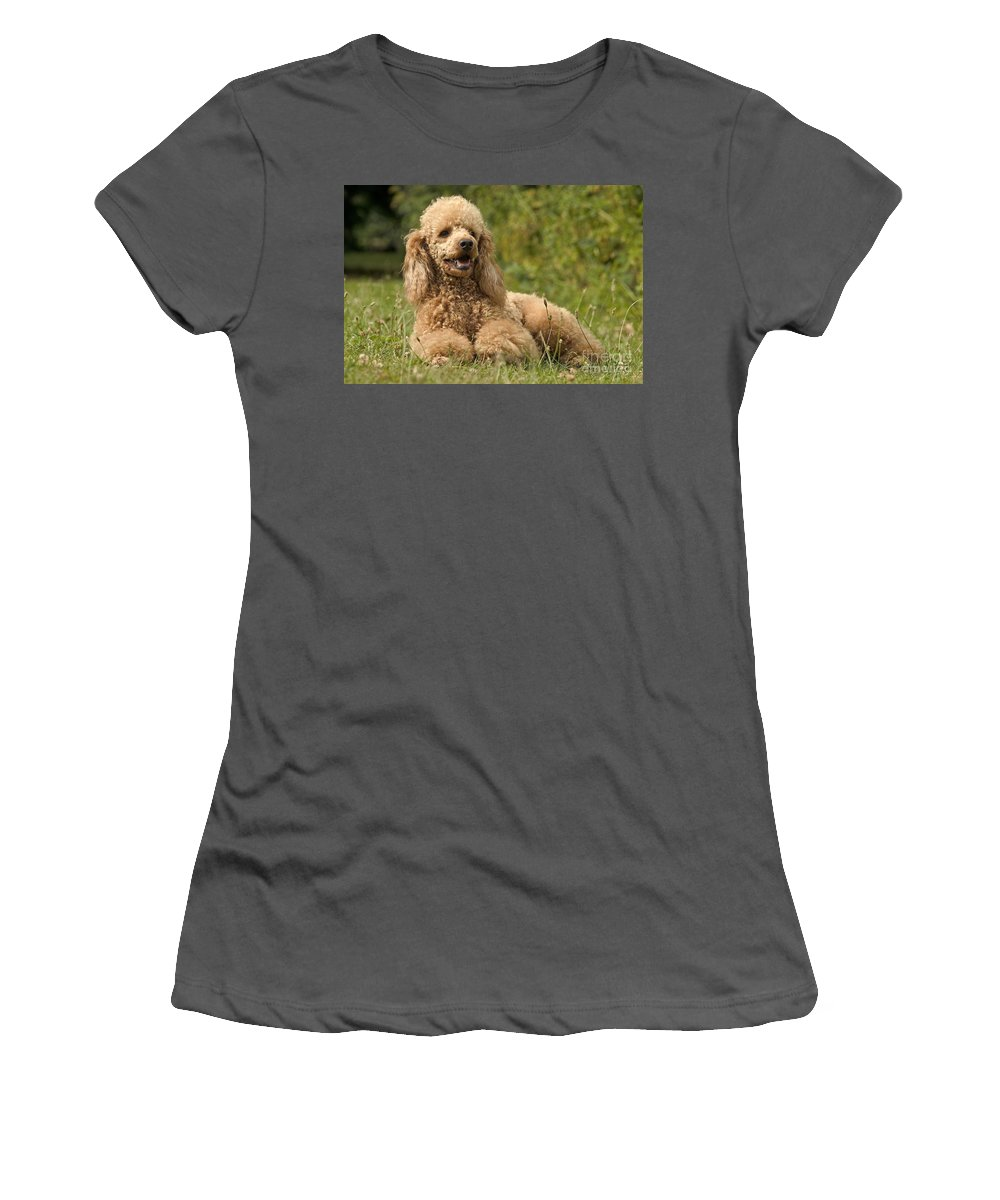 Poodle Women's T-Shirt (Athletic Fit) featuring the photograph Poodle Dog by Jean-Michel Labat