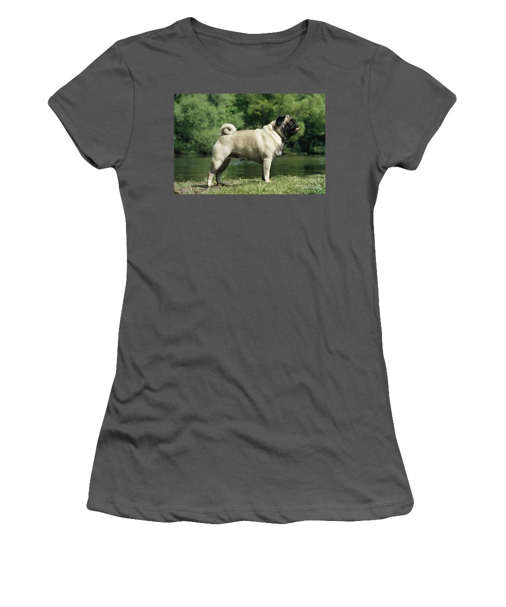 Pug Women's T-Shirt (Athletic Fit) featuring the photograph Pug Dog by Jean-Paul Ferrero